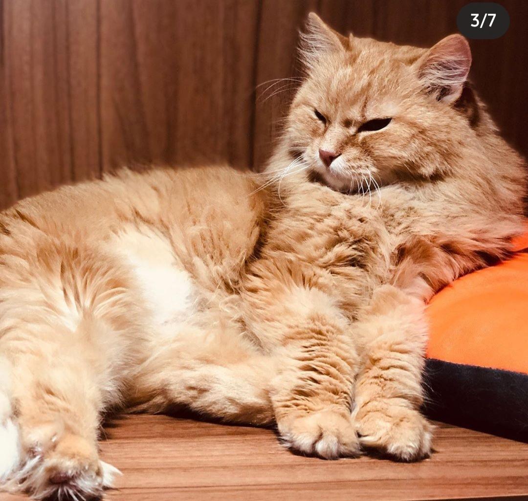 котята и коты