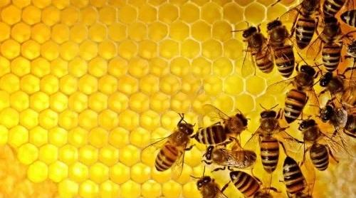 оборудование для пчёл