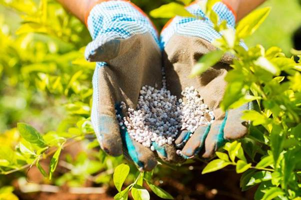 удобрения для повышения урожая